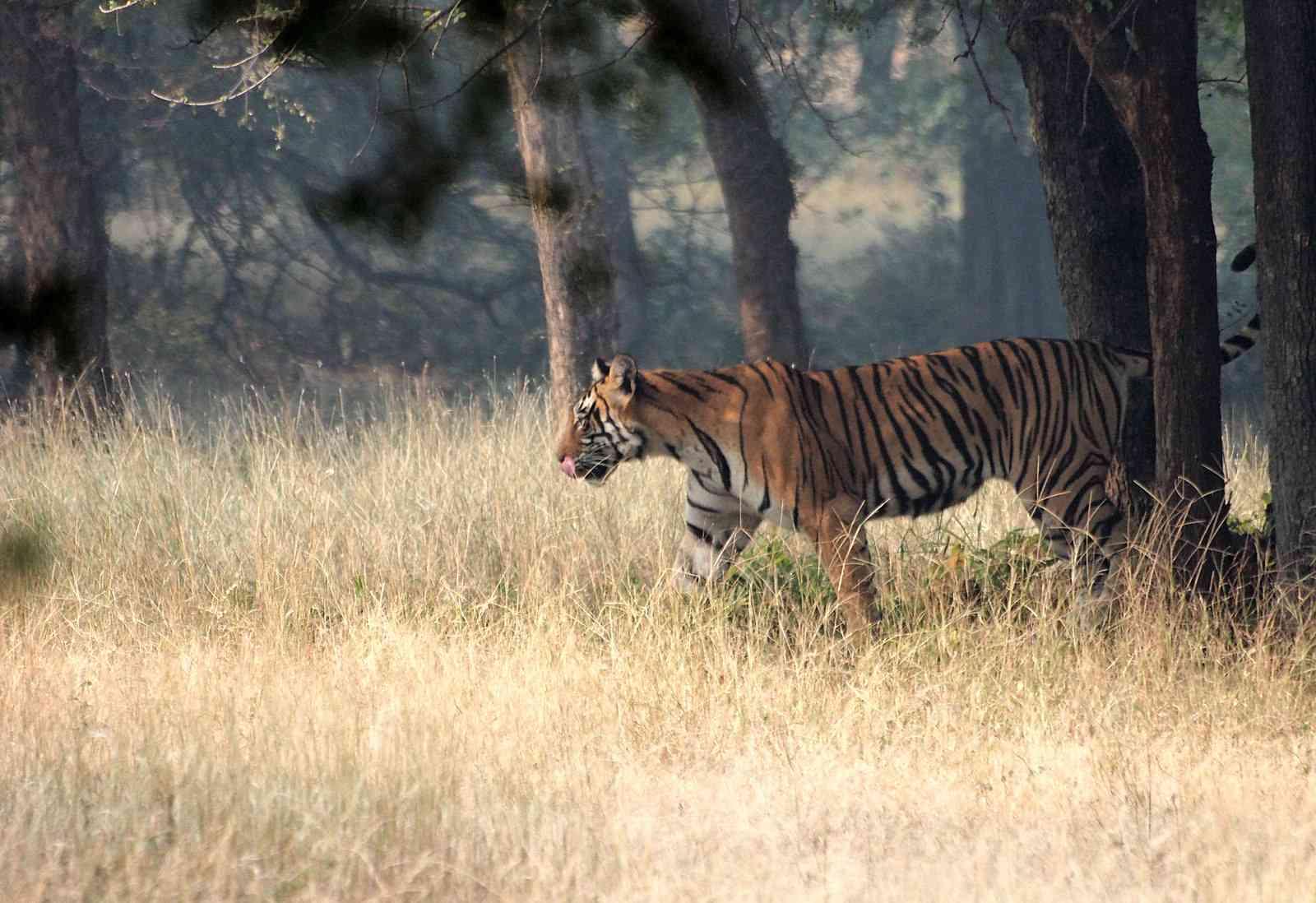 Ranathambore Tiger Reserve