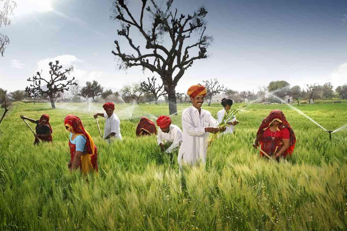 Farmers-growing-malt-barley-in-their-field