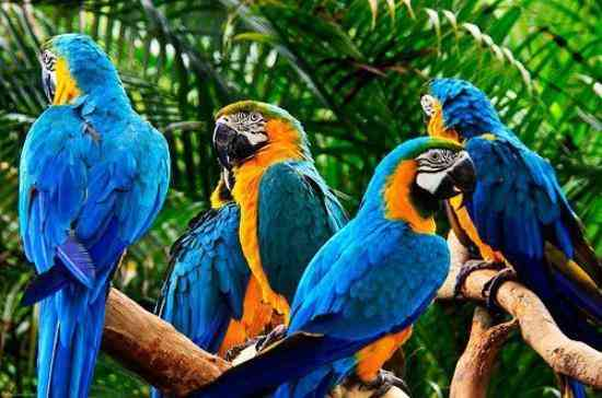Udaipur Bird Park to House Blue and Gold Macaws