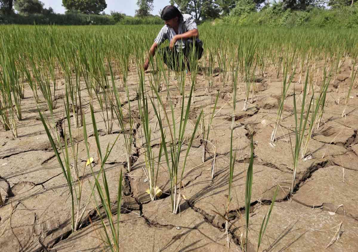 किसानों की कर्जा माफी के लिए बनी हाईपावर कमेटी केरल मॉडल अपनाने पर विचार कर रही है.