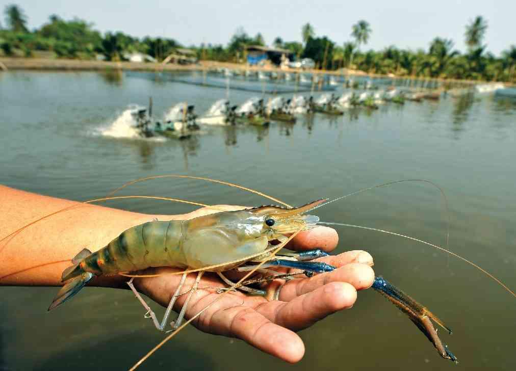 prawn farming in rajasthan
