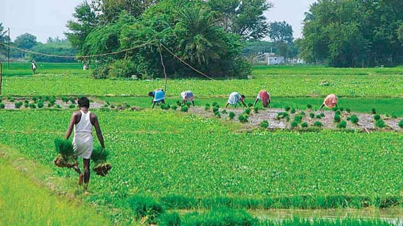 राजस्थान के किसानो को सरकार की बड़ी सौगात