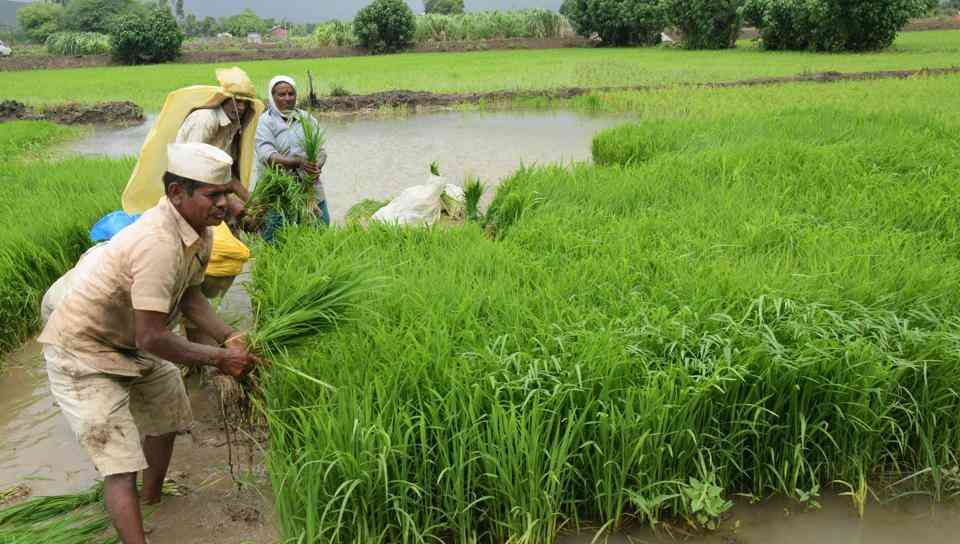 Farm Loan Waiver Rajasthan