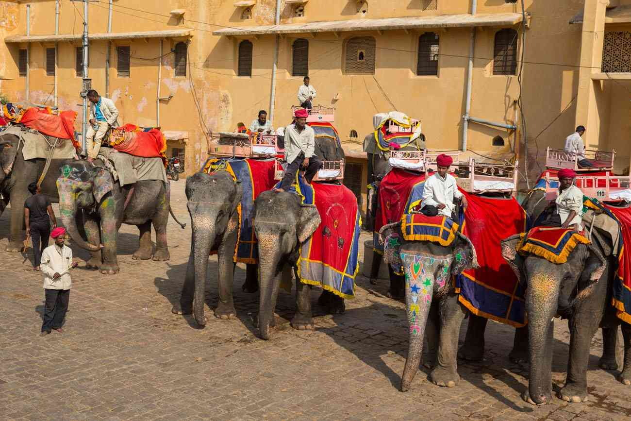 Elephants ready to give the Joyride of Amer Fort
