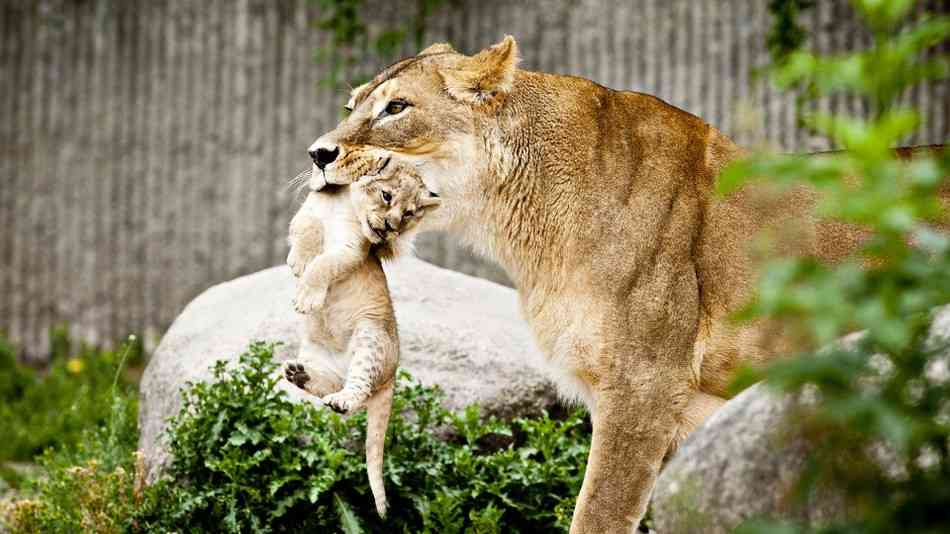 2 new cubs born at Machia Biological Park