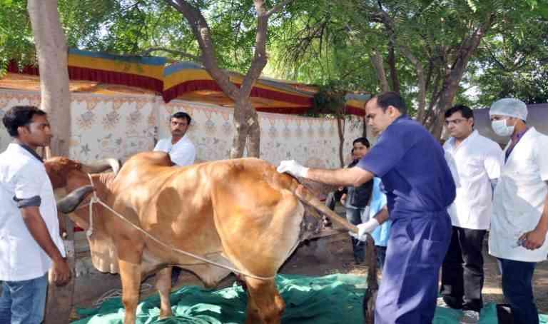 Animal Pakhwara in Rajasthan