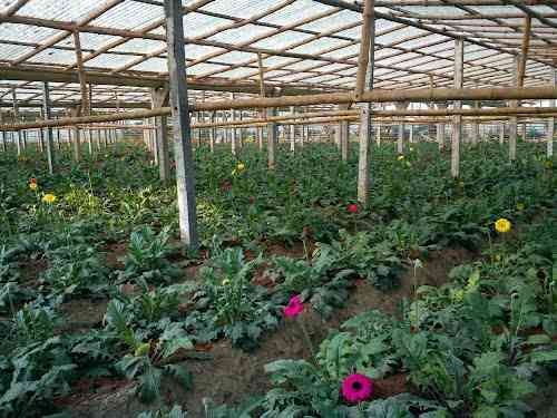 Flower research centre in Rajasthan