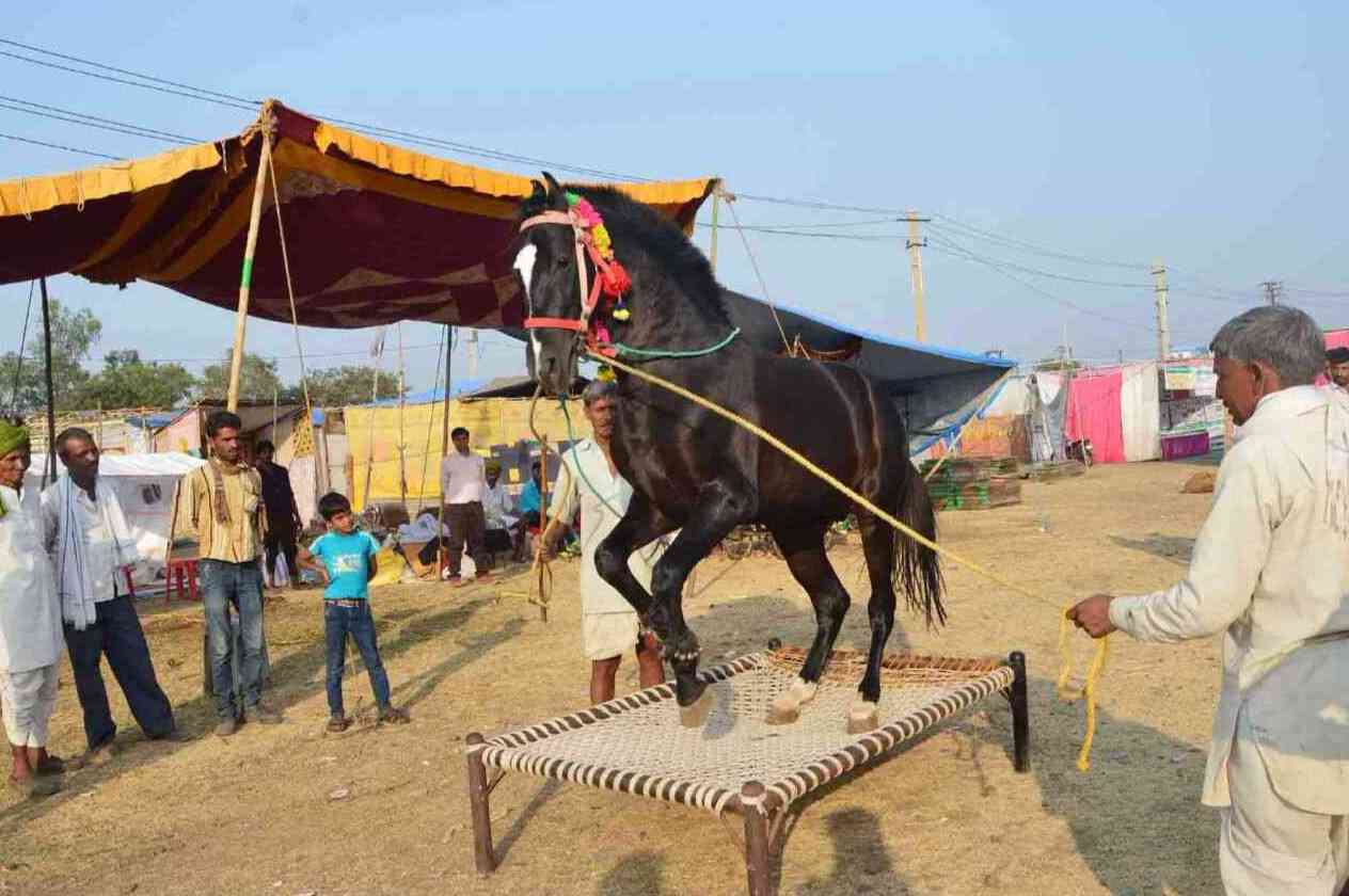 Chandrabhaga Fair 2017 images