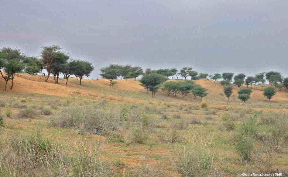 lands of Shekhawati