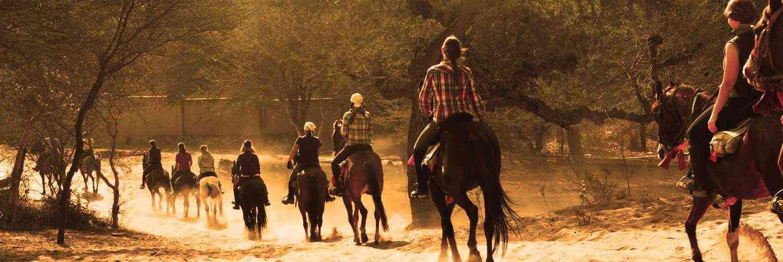 Rajasthan Safari Tour