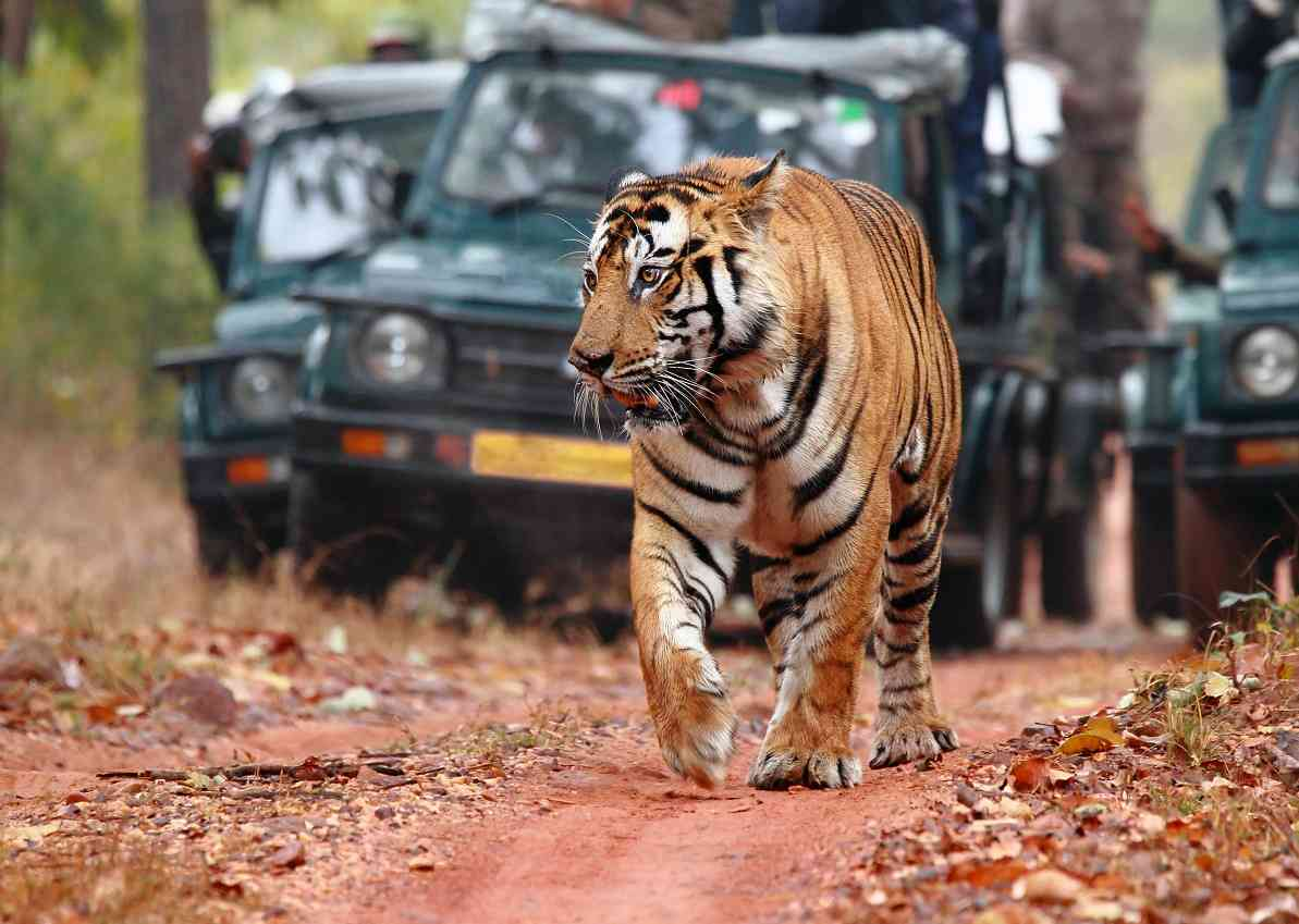 Sawai Madhopur- Places to visit in Rajasthan