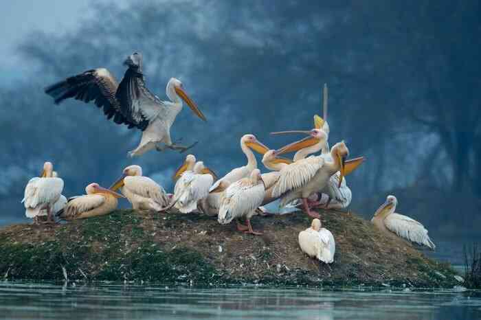 Bharatpur- Best Time to Travel