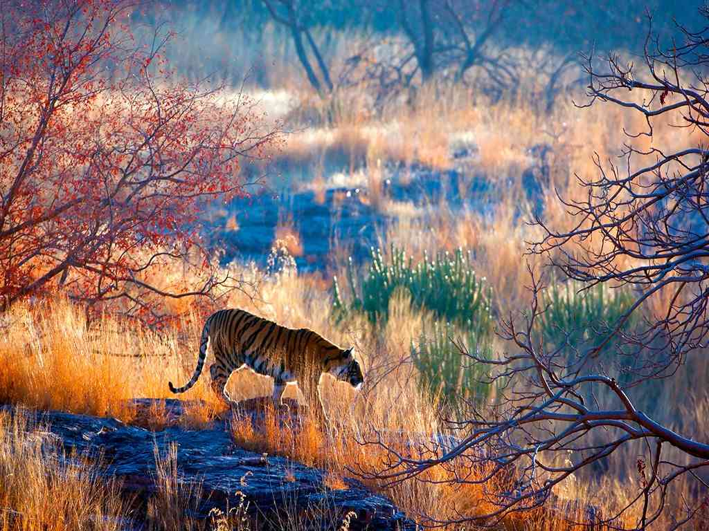 Ranthambore- Best Time to Travel