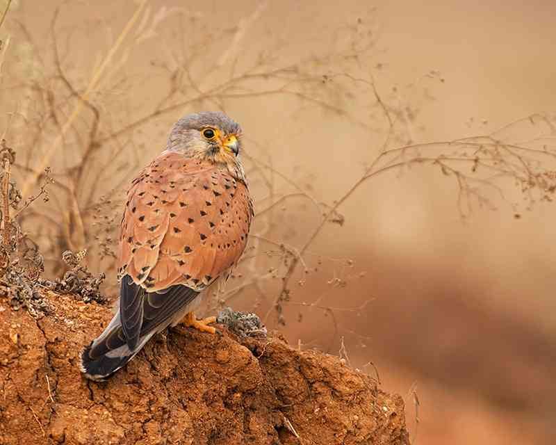 Places to visit in Jaisalmer- Desert National Park