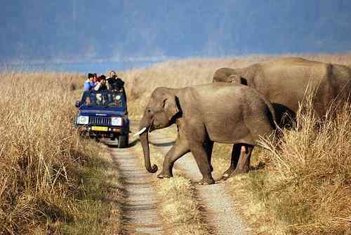 Rajasthan Tourist Destinations nearby Delhi- Sariska National Park
