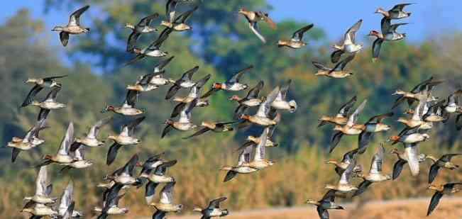 Rajasthan Tourist Destinations nearby Delhi-Bharatpur Bird Sanctuary