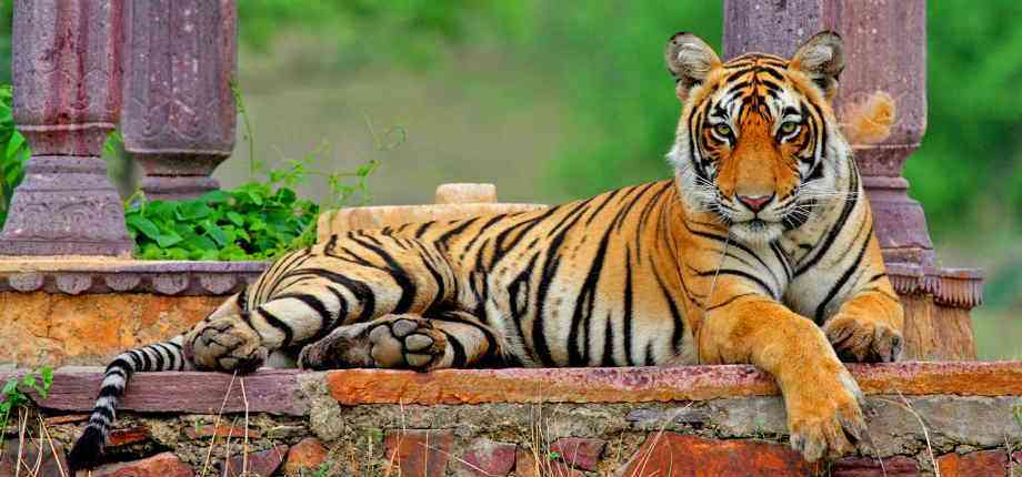 Rajasthan Tourist Destinations nearby Delhi- Ranthambore National Park