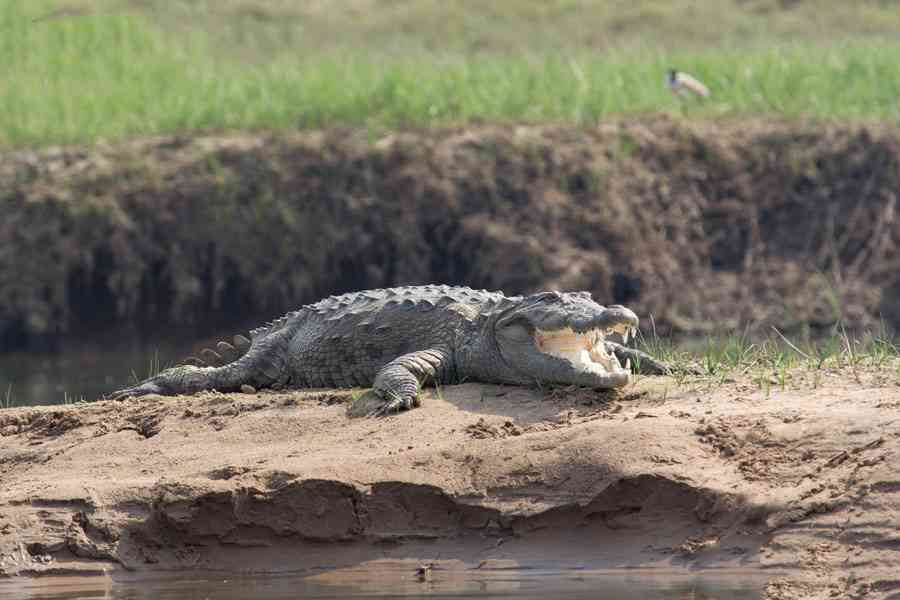 Crocodile Sanctuary, Sawai Madhopur