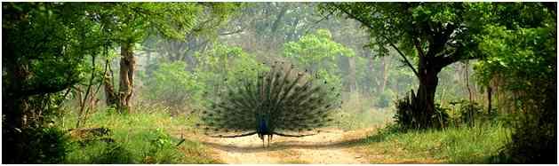 Ranthambore National Park, Ranthambore