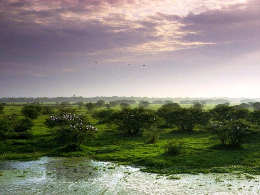 Keoladeo National Park Bharatpur