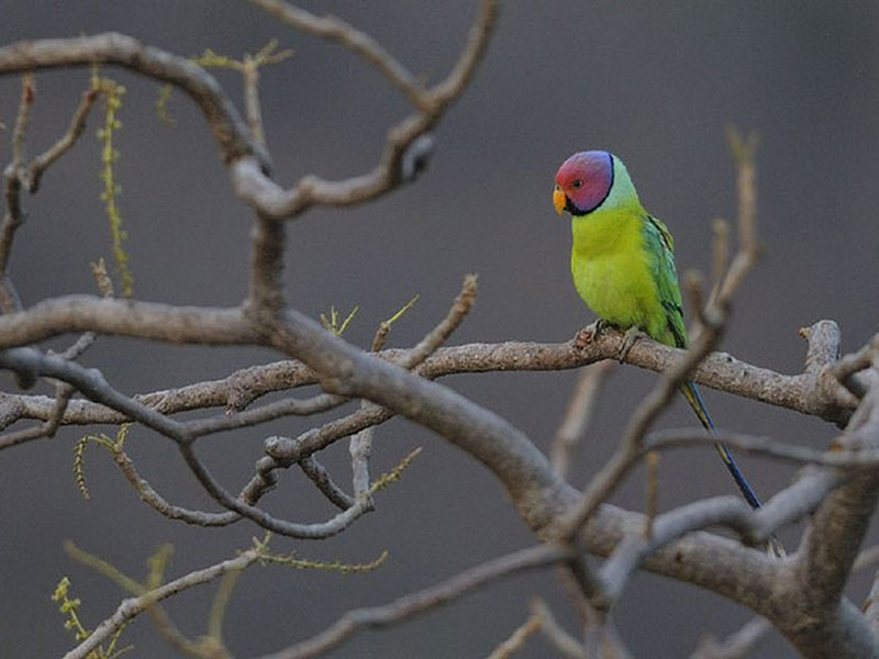 Wildlife Sanctuaries in Rajasthan