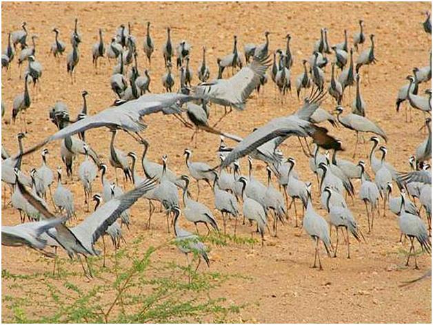 Desert National Park of Jaisalmer