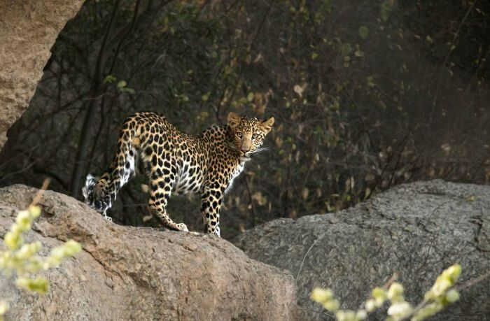 Mount Abu Wildlife Sanctuary Safari