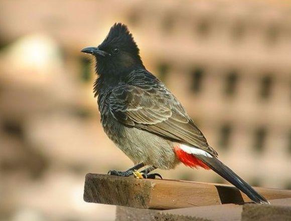 Avifauna of Rajasthan!