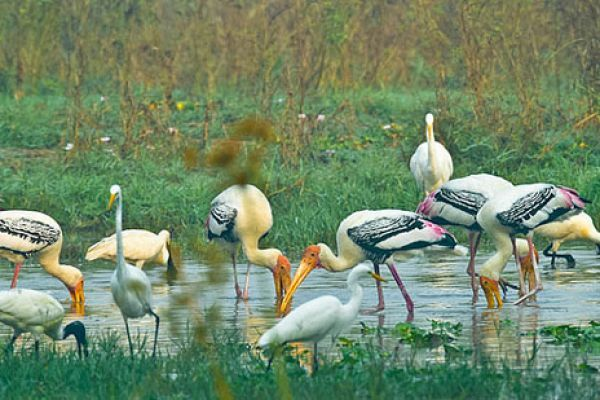 Keoladeo National Park | Rajasthan Tourism