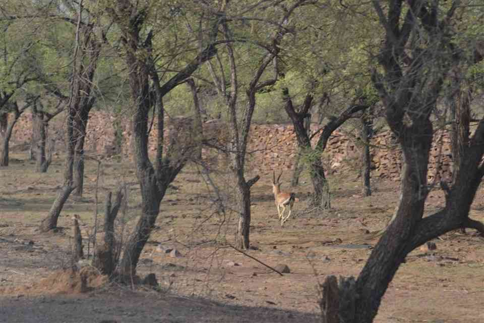 Darrah Wildlife Sanctuary, Kota