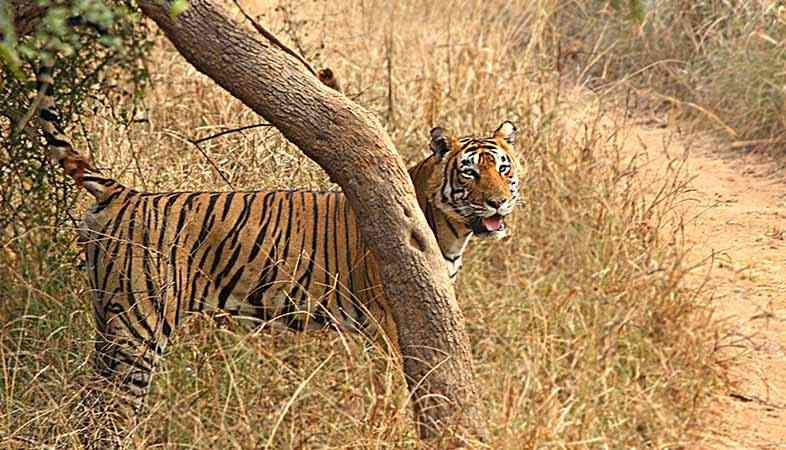 Jamwa Ramgarh Wildlife Sanctuary