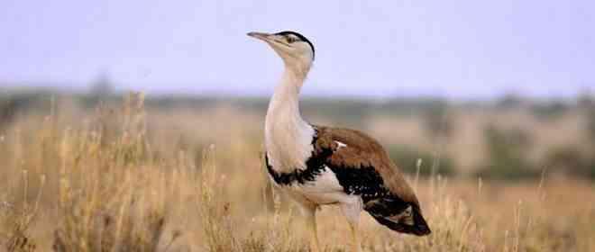 Wildlife in Thar Desert