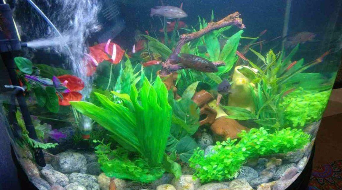 fateh sagar aquarium