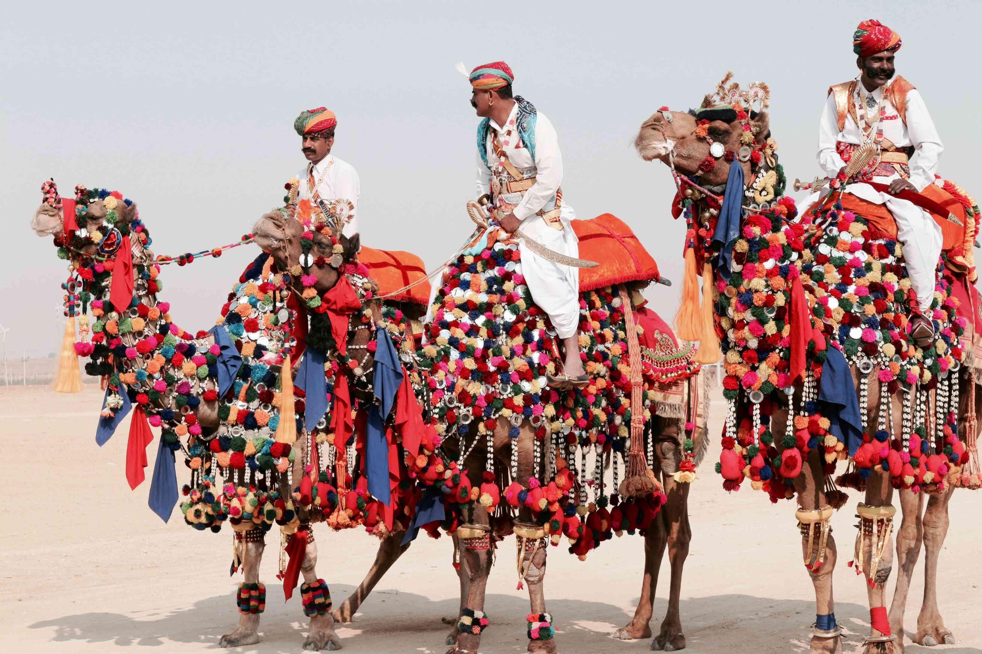 Kolayat Camel Fair