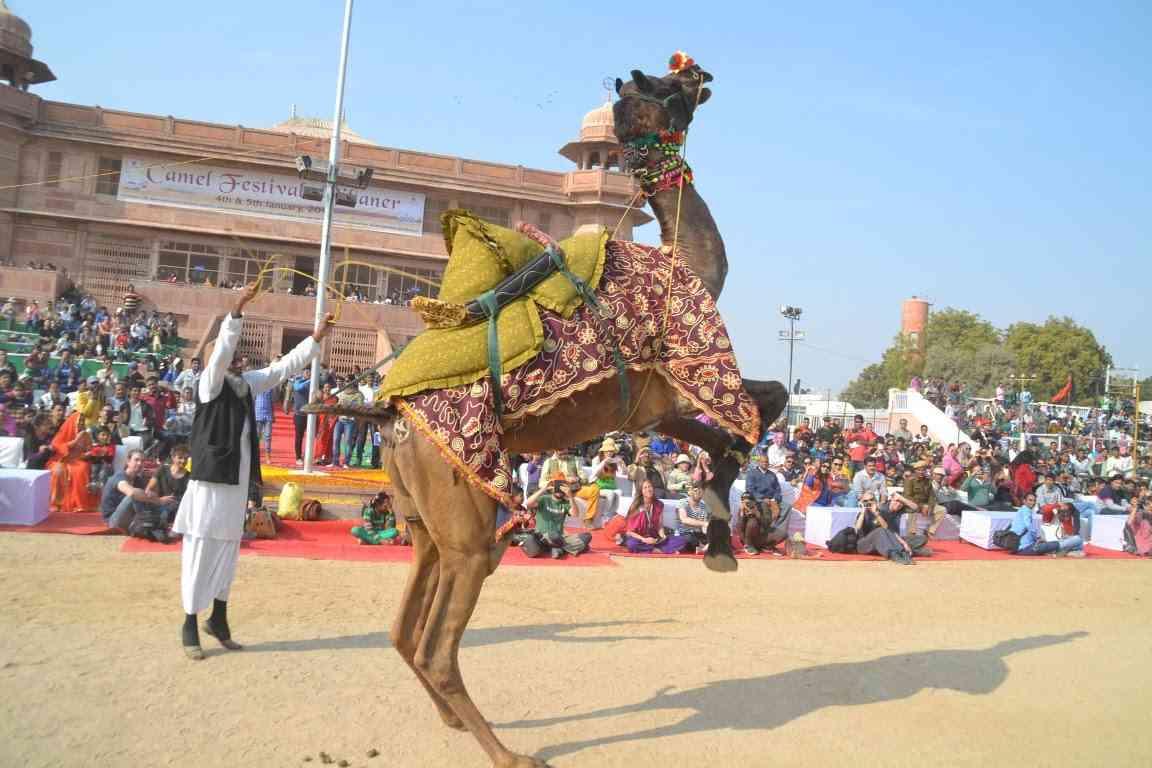Image result for Bikaner Camel Festival