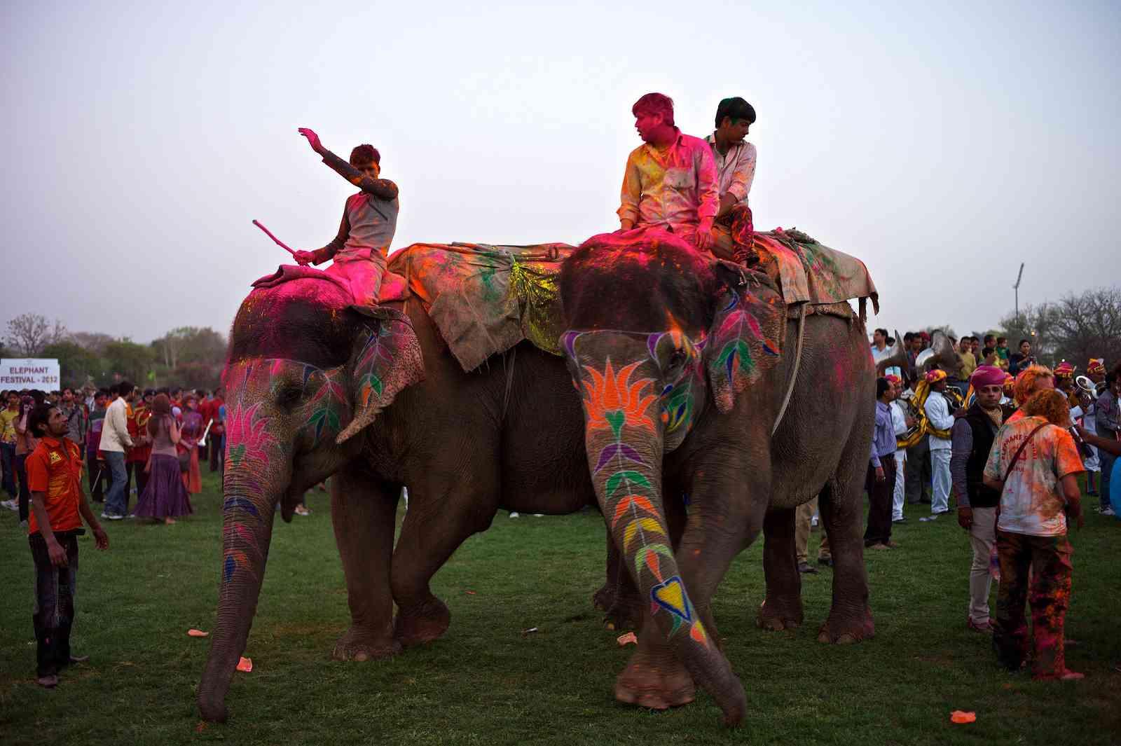 EleHoli Fest - Jaipur Holi Festival