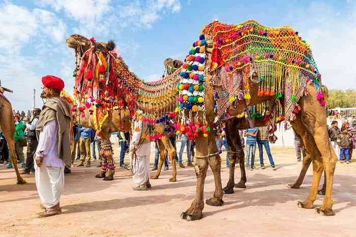 Bikaner camel fair